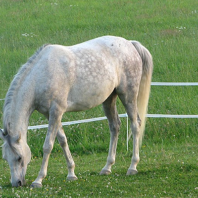 Keep Your Livestock Safe: Choose The Right Electric Fencing