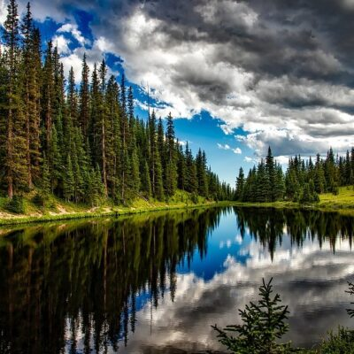 A Guide to Reforestation in the US